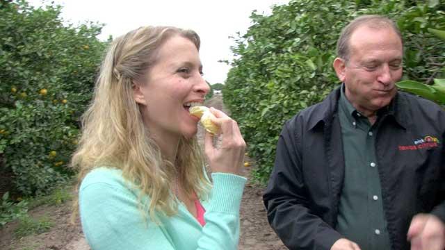 South Tex Organics grapefruit orchard