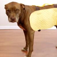 Dog Costume for Halloween!